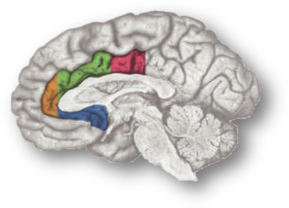 The importance of respecting variation in cingulate anatomy: Comment ...